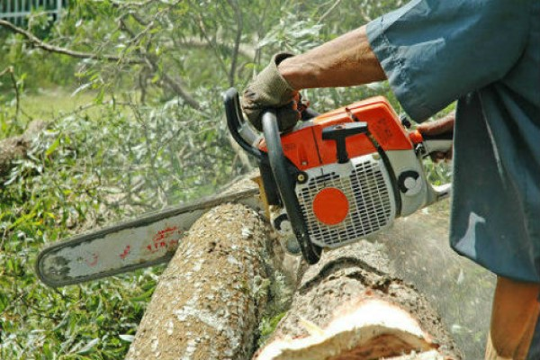 Tree-Services-image